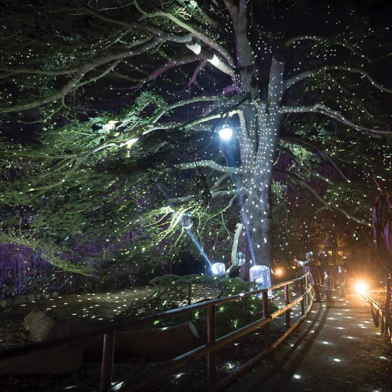 Haughley Park illuminated for Spectacle of Light