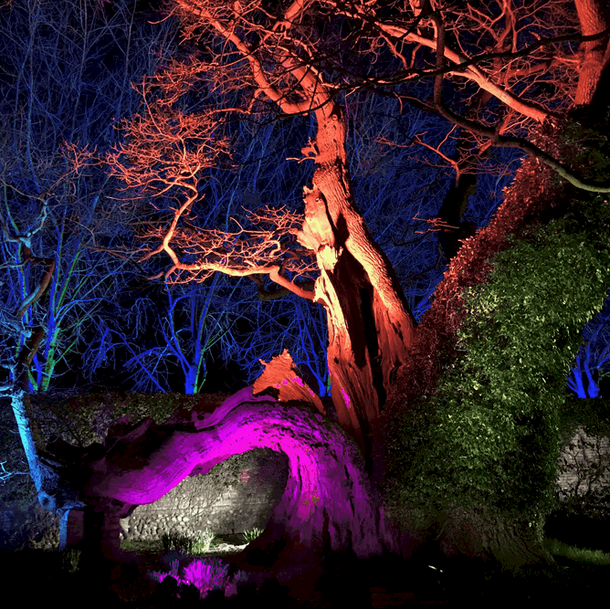 Spectacle of Light Haughley - 2021