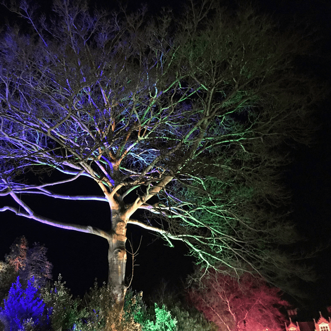 Spectacle of Light at Haughley Park 2021 illuminated trail